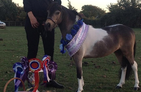 Dayhills Travelling Technicolour wins his HOYS ticket
